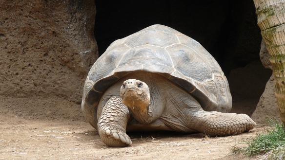 turtle-177661_960_720